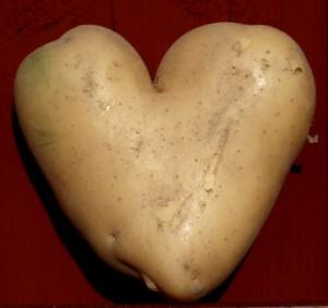 Potatis i våra hjärtan
